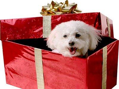 20101210152340 002 regalo